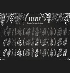 Leaves hand drawn vector