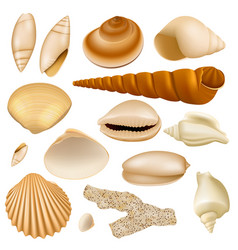 realistic seashell collection vector image