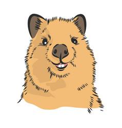 Smiling australian quokka kwokka sketch vector