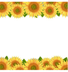 Sunflowers border isolated white background vector