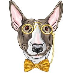 hipster dog Bullterrier breed vector image vector image