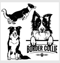 Border collie dog - set isolated vector