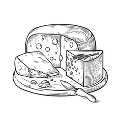 cheese hand drawn sketch engraving vector image