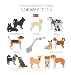 Dogs country origin norway dog breeds vector