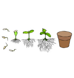 germ and seeds sprout with vector image