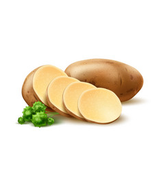 Realistic potato with leaves vector