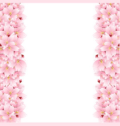 Sakura cherry blossom flower border vector