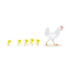 walking white hen and chicks isolated on white vector image