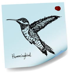 hummingbird sketch on sticky paper vector image vector image