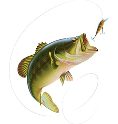 Largemouth Bass vector image