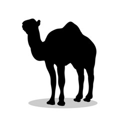 camel mammal black silhouette animal vector image vector image