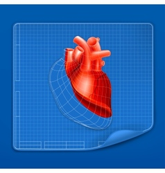 Heart structure blueprint vector image vector image