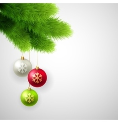 Green pine branches with white red vector