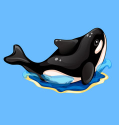 beautiful black and white orca on blue background vector image