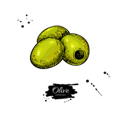 pitted olive hand drawn vector image