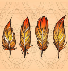 hand drawn set of feathers on beige vintage vector image