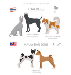 Dogs country origin thai and malaysian dog vector