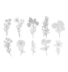 hand drawn medical herbs line drawing plants vector image
