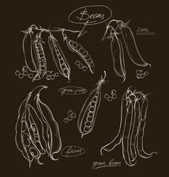 hand drawing legumes on a black backgroun vector image vector image