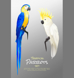 realistic tropical parrots set vector image vector image