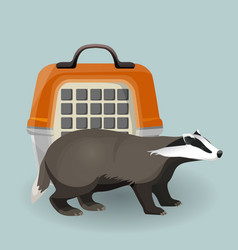 Badger carry cage and animal isolated on grey vector