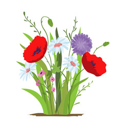 flowerbed flower red poppy set of wild forest vector image