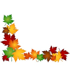 Maple leaves colorful border vector image