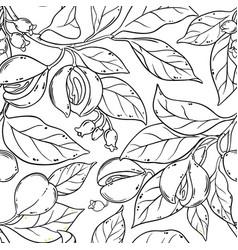 nutmeg seamless pattern vector image