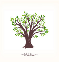 oak beautiful tree vector image