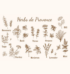 Provencal spices and herbs vector