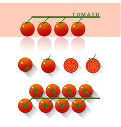 set of fresh tomatoes isolated on white background vector image