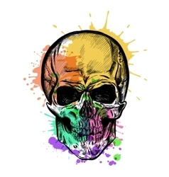 Skull Sketch With Watercolor Effect vector
