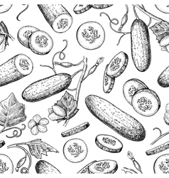 Cucumber hand drawn seamless pattern vector image