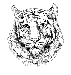 Artwork tiger sketch black and white drawing vector image