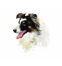 Border Collie Animal dog watercolor vector