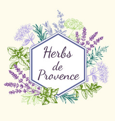 Hand drawn background with provencal spices vector