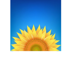Yellow sunflowers flower with blue background vector