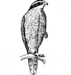 northern goshawk vector image vector image