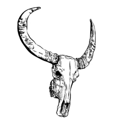 Cow skull- hand drawn vector image vector image