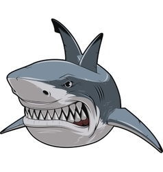 Angry white shark vector image