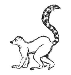Sketch lemur vector