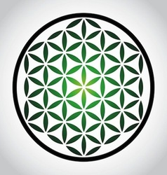 Flower Of Life vector image vector image