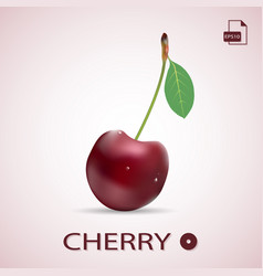 Single ripe red cherry with a leaf isolated on a vector