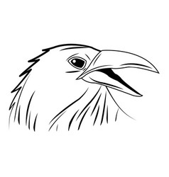 Crow raven or corvus bird vector