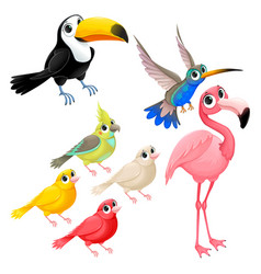 Group of funny tropical birds vector