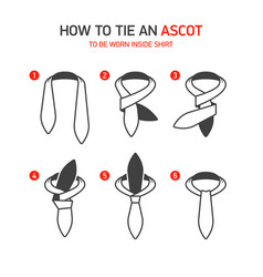 how to tie an ascot instructions vector image vector image