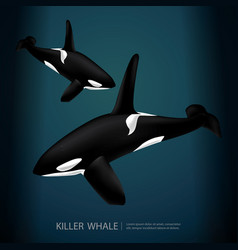 killer whale under the sea vector image