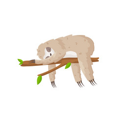 Nice little sloth firmly sweetly sleeps on a tree vector