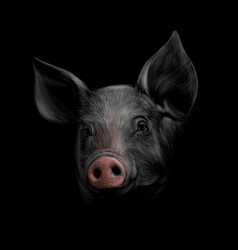 portrait a pig head on a black background vector image