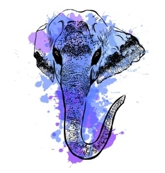 Watercolor elephant portrait on white background vector image